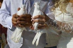 Palomas de la boda Fotografía de archivo libre de regalías