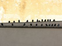 Palomas de la ciudad Fotografía de archivo