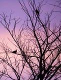 Palomas de la mañana Imagenes de archivo