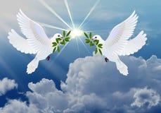 Palomas de la paz Imágenes de archivo libres de regalías
