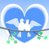 Palomas del amor Fotografía de archivo libre de regalías
