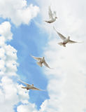 Palomas del blanco del grupo Fotografía de archivo