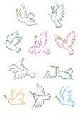 Palomas del vuelo con la rama de olivo Imagen de archivo libre de regalías