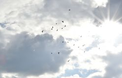 Palomas del vuelo en el cielo Fotos de archivo