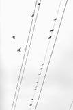 Palomas en alambres Imágenes de archivo libres de regalías
