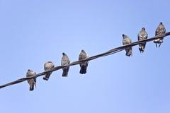 Palomas en alambres eléctricos Fotografía de archivo