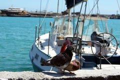 Palomas en amor en la orilla de mar Fotografía de archivo libre de regalías