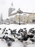 Palomas en ciudad del invierno Foto de archivo libre de regalías