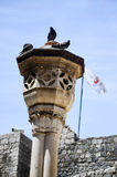 Palomas en columna en la ciudad vieja de Dubrovnik Imagen de archivo