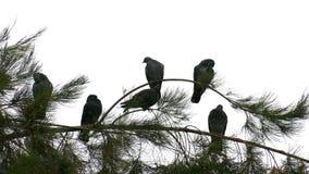 Palomas en el árbol metrajes