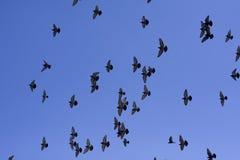 Palomas en el aire foto de archivo libre de regalías