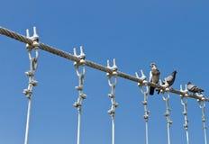 Palomas en el cable del puente Fotografía de archivo libre de regalías