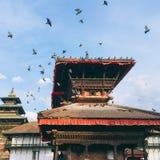 Palomas en el cuadrado de Durbar de Katmandu, Nepal foto de archivo