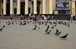 Palomas en el cuadrado de la estación, Kharkov, Ucrania, el 13 de julio de 2014 Imágenes de archivo libres de regalías