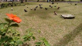 Palomas en el parque imagenes de archivo