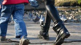 Palomas en el parque Alimentación de aves de corral almacen de metraje de vídeo