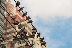 Palomas en el polo eléctrico en la ciudad grande imágenes de archivo libres de regalías