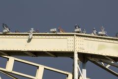 Palomas en el puente Imagenes de archivo