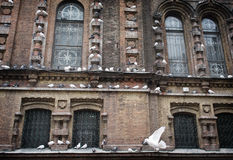 Palomas en el santo Sophia Cathedral, China de Harbin Fotografía de archivo