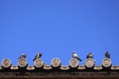 Palomas en el tejado japonés del templo Foto de archivo
