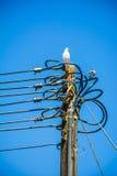 Palomas en electricidad Imagenes de archivo