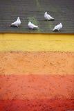 Palomas en la azotea Foto de archivo