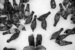 Palomas en la nieve blanca en ciudad Fotos de archivo libres de regalías