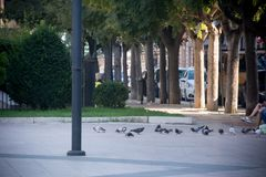 Palomas en la plaza principal de Taranto fotografía de archivo libre de regalías