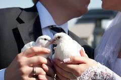 Palomas en las manos de la novia y del novio Imágenes de archivo libres de regalías
