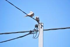 Palomas en los alambres y el cielo azul Foto de archivo