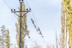 Palomas en posts eléctricos Fotos de archivo libres de regalías