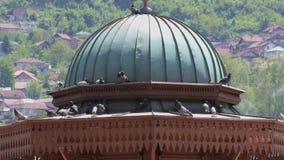 Palomas en Sarajevo almacen de video