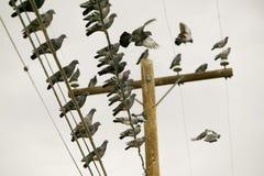 Palomas en un alambre Imagen de archivo libre de regalías