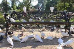 Palomas en un banco de parque imagen de archivo libre de regalías