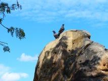 Palomas encima de una piedra Foto de archivo