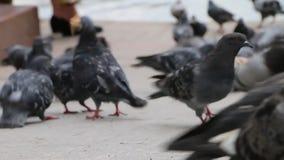 Palomas que alimentan a la muchedumbre del parque mucho metrajes