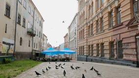 Palomas que caminan alrededor del café al aire libre en la calle de Lviv en el área sucia pobre, vida urbana almacen de video