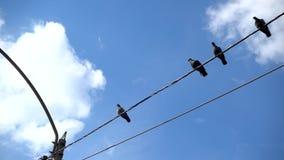 Palomas que colocan y que vuelan los alambres eléctricos metrajes