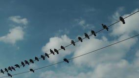 Palomas que colocan y que vuelan los alambres eléctricos almacen de metraje de vídeo