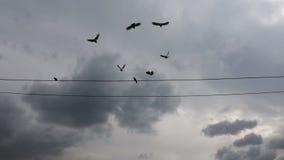 Palomas que colocan y que vuelan los alambres el?ctricos almacen de video