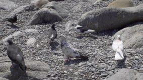 Palomas que comen en la playa