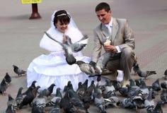 Palomas que introducen de los pares de la boda Fotos de archivo libres de regalías