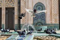 Palomas que juegan con agua en la fuente de una mezquita Foto de archivo