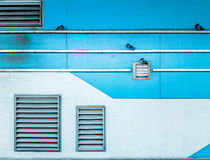 Palomas que se pegan a la pared verde, ventilación del aire, broche de la calle Imagen de archivo