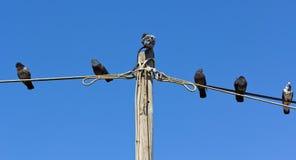 Palomas que se reclinan sobre el alambre contra el cielo azul Foto de archivo