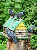 Palomas que se sientan en alimentador Fotografía de archivo