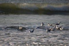 Palomas que se sientan en el océano foto de archivo libre de regalías