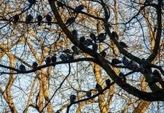 Palomas que se sientan en una rama fotografía de archivo libre de regalías