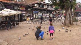 Palomas que toman vuelo del este - cuadrado europeo almacen de video