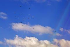 Palomas que vuelan, cielo azul, nubes blancas Fotografía de archivo